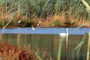 Προστασία της πολύτιμης λίμνης  Κουμουνδούρου. Οδηγός η φύση και η ιστορία